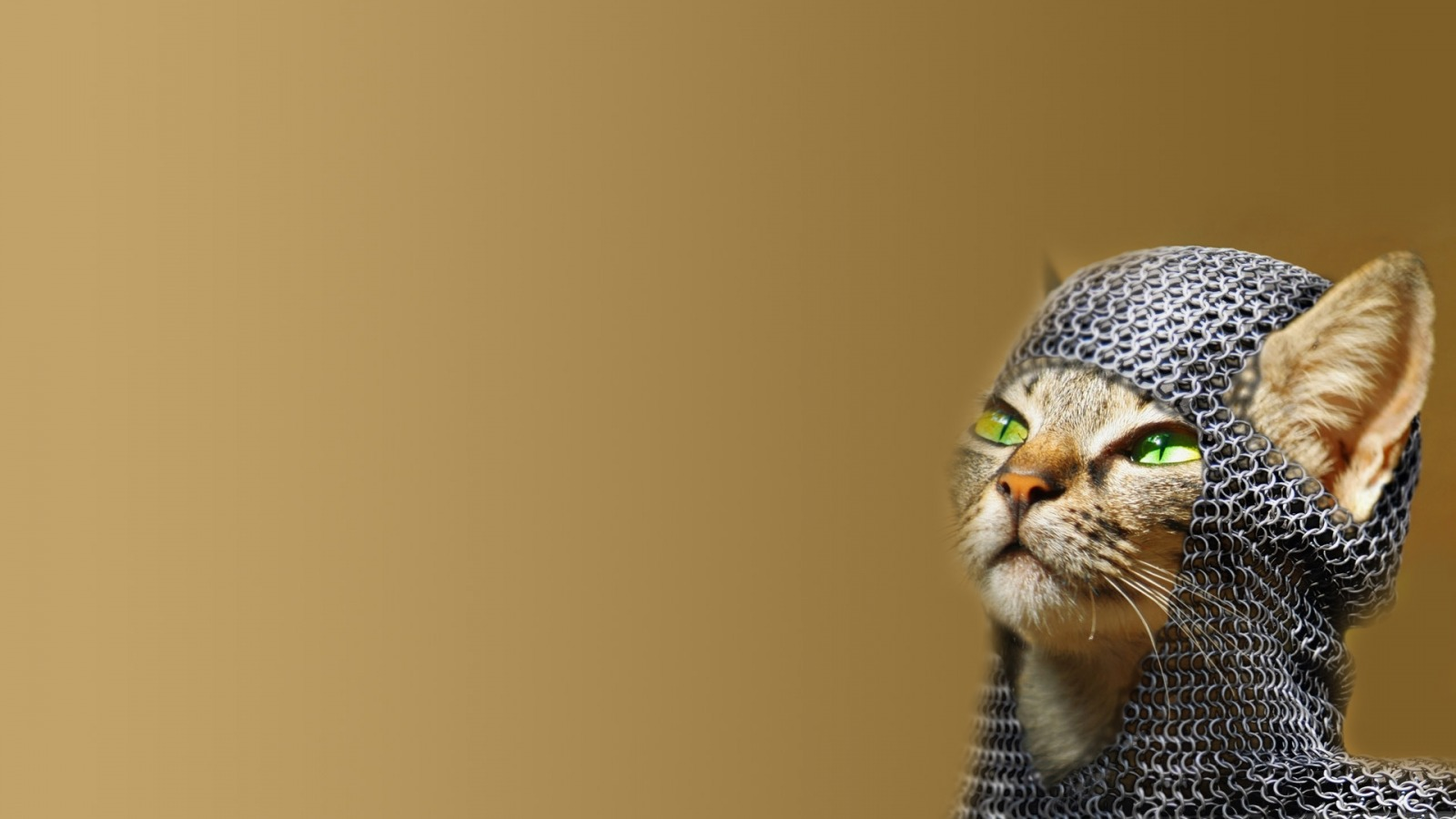 cat-chainmail-green-eyes