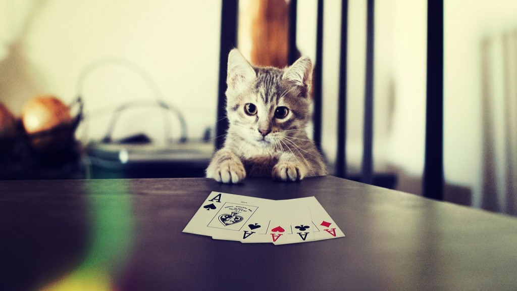 kotik-karty-lapy-poker-cat