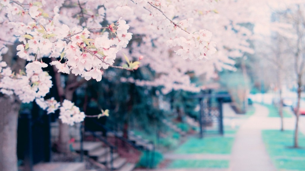 blossoms-spring-tree-cvety