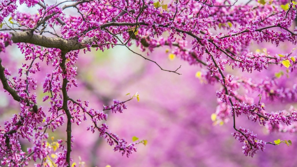 nature-tree-branches-spring