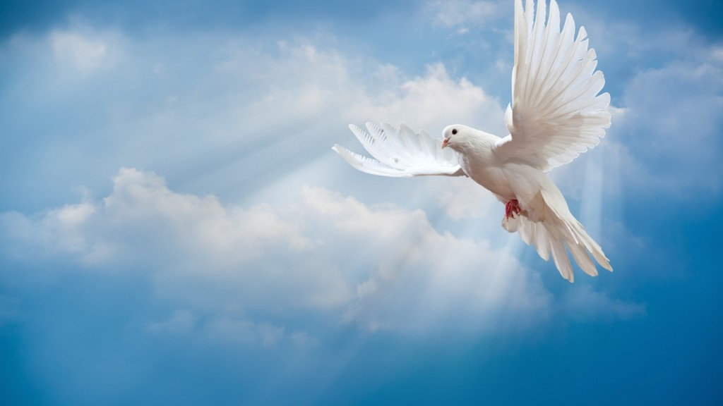 dove-peace-sky-pigeon-white-2204