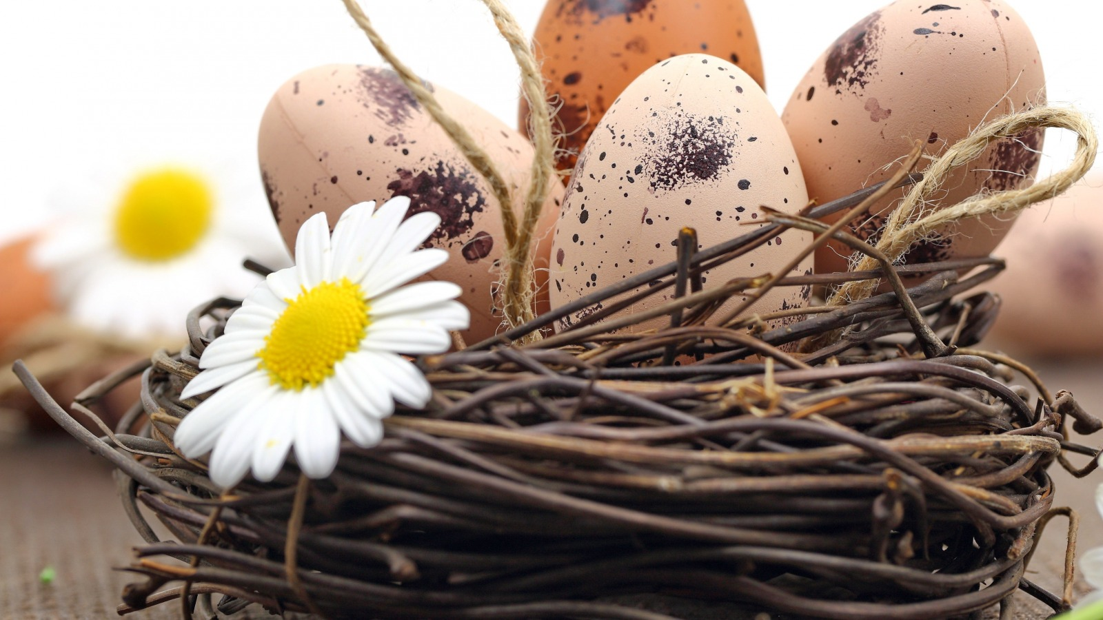 easter-eggs-nest-flowers