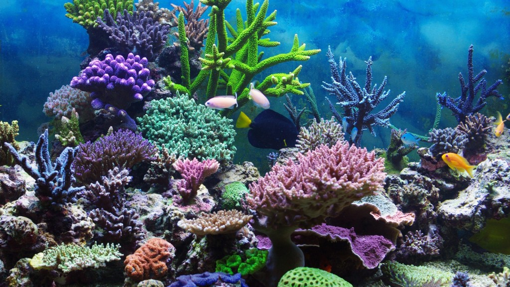 tropical-coral-reef-5582